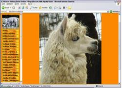 Website in neuem Fenster �ffnen - S�damerikanische Alpakas f�hlen sich auch auf Th�ringer Weiden wohl