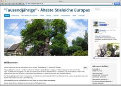 Website in neuem Fenster öffnen - Spenden sollen Europas älteste Stieleiche vor der Säge bewahren